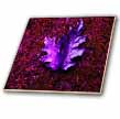 click on Pink and Purple Leaf Carpet  to enlarge!