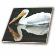 click on White Pelican With Mirrored Reflection to enlarge!
