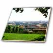 click on Growing green grapes and an amazing panoramic view of Prague to enlarge!