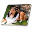 click on Rough Collie to enlarge!