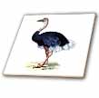 click on Vintage Ostrich Image to enlarge!