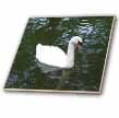 click on Beautiful White Swan to enlarge!
