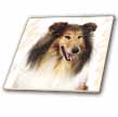 click on Rough Collie Portrait to enlarge!