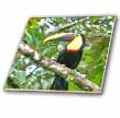 click on Colorful Toucan On Jungle Branch to enlarge!