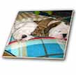 click on English Bulldog Powernap to enlarge!