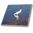 click on Egret On Water to enlarge!