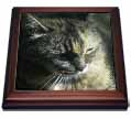 click on Gorgeous Maine Coon Cat The Queen to enlarge!