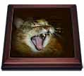 click on Gorgeous Maine Coon Cat Meow Roar to enlarge!