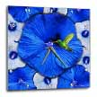 click on Hummingbird and Dark Blue Hibiscus to enlarge!