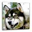 click on Alaska Malamute to enlarge!