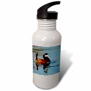 3dRose - Danita Delimont - Ducks - Male Ruddy duck, Henderson, Nevada - US29 MPR0067 - Maresa Pryor - Water Bottles at Sears.com